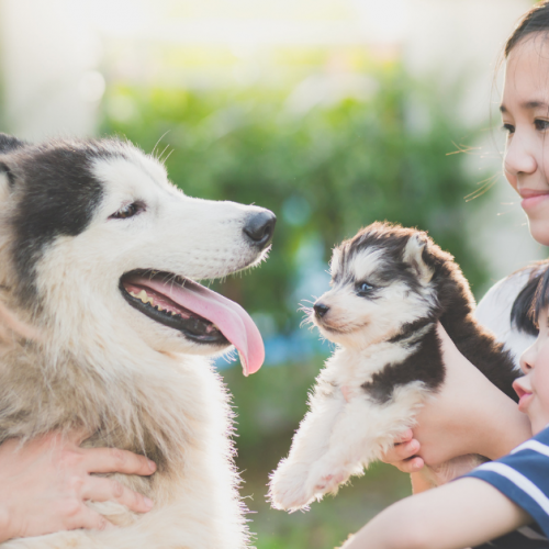 5 Simple Ways to Care for Your Puppy